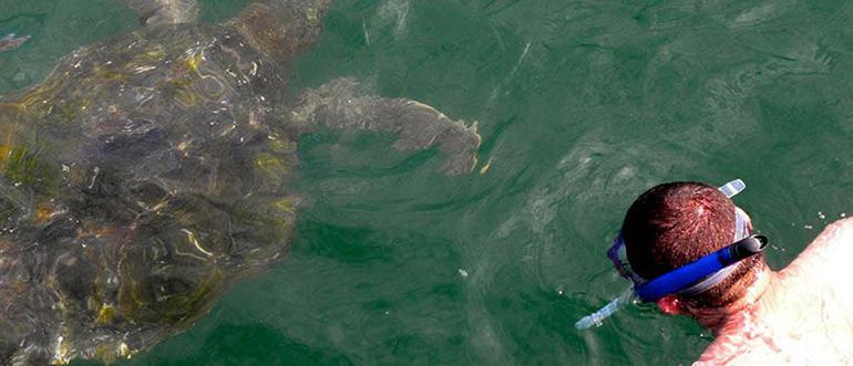 Nadar con tortugas